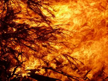 Health Crisis Brought by Bushfires Intensifies