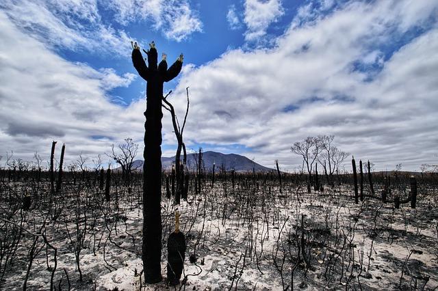 Australian Bushfire and Its Effect On Healthcare